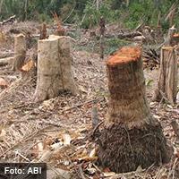 deforestacion-abi-interior